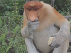 Смешные обезьяны - Новая подборка приколов!